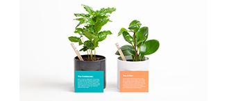 Two United Way Plantsie plants